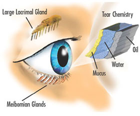 Dry Eyes Tear Chemistry - Eye Disorders